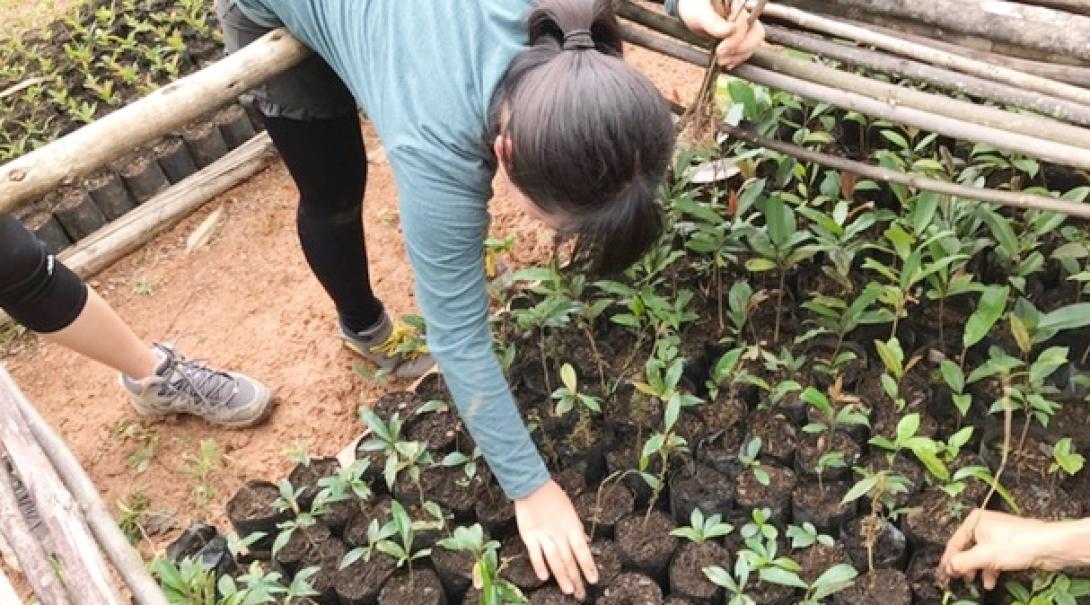 マダガスカルの熱帯雨林で植林活動に取り組む日本人高校生ボランティア